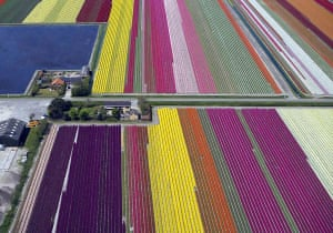 Netherlands: Tulip fields
