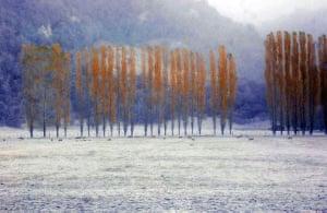 Futaleufu, Chile: An ash-covered forest in Futaleufu