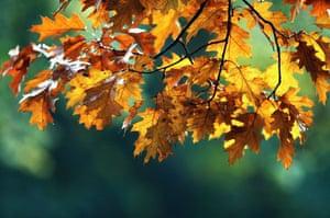 London, UK: Leaves begin to turn brown in Hyde Park
