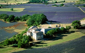 A house surrounded by lavender fields