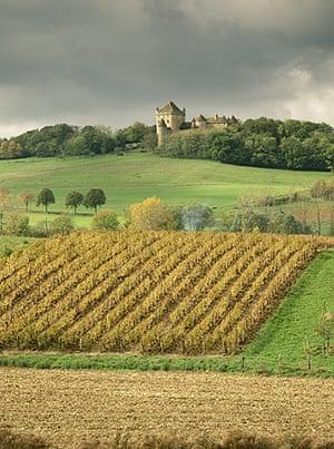A vineyard near Lons le Saunier