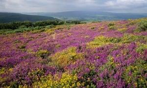 Exmoor, Somerset