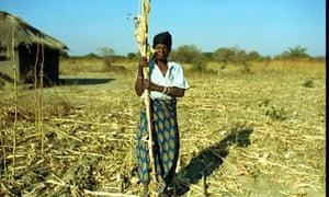 woman farmer with her failed maize crop