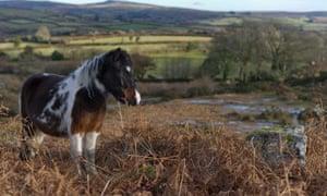 ponies on dartmoon