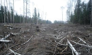 A clearing in the Khimki forest outside Moscow, Russia