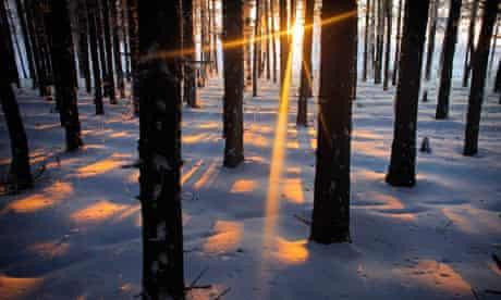 russian winter scene in woods