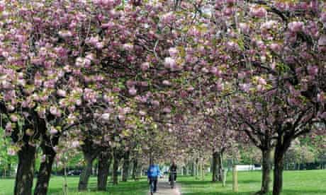 Cherry tree audit