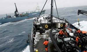 The Steve Irwin and Japanese ship Yushin Maru 2