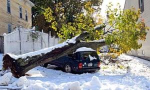 tree falls after snow US