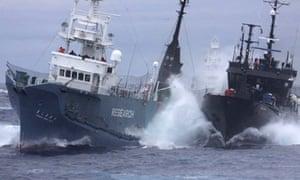 Japanese whalers and Sea Shepherd
