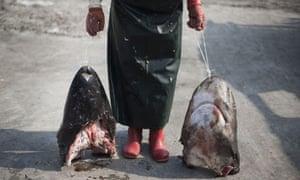 Sharks' heads
