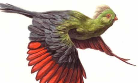 Birdwatch November