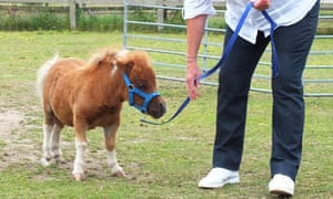 dwarf pony super tiny animals tv review