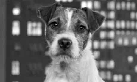 uggie the dog actor in the artist