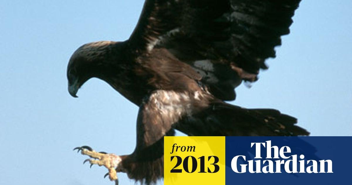 US windfarms avoiding prosecution for eagle deaths
