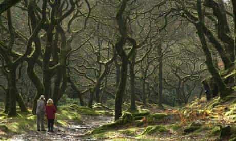 doone valley north devon ancient woodland