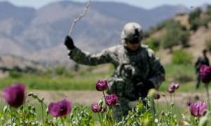 Afghanistan heroin poppies, US soldier