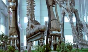 Zhucheng dinosaur bones