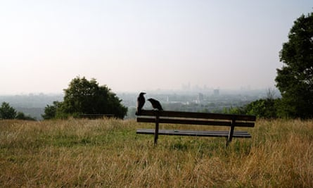 Two crows perched on a bench, surrounded by burnished grass, London lurking in the misty distance