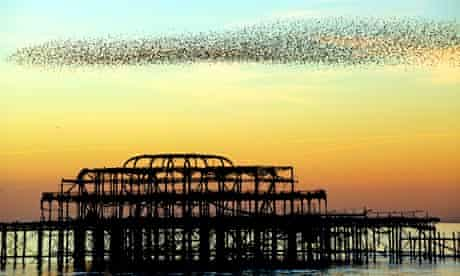 Starlings flock over Brighton's derelict west pier at sunset