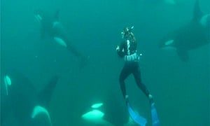 natural world woman who swims with killer whales