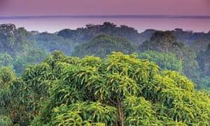 Amazon rainforest treetops