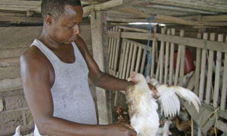 Charles Tagoe works on his poultry farm in Bubiashie Atico