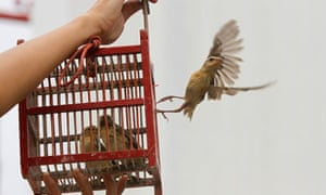 A Thai person releases a bird from a cage for good luck in Lopburi province