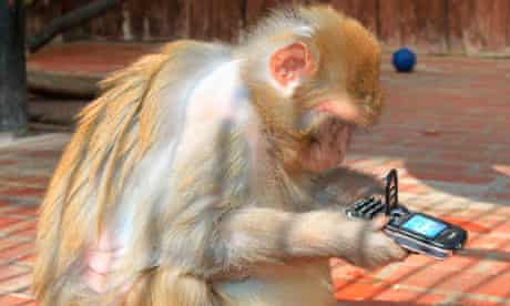 A monkey playing with a mobile phone