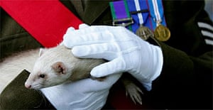 A ferret at the opening of the Imperial War Museum's exhibition The Animals' War