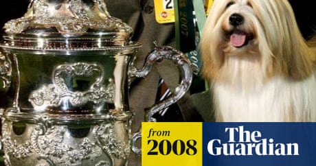 Pedigree pulls sponsorship of Crufts | Life and style | The