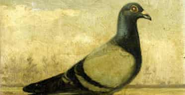 One of J Baldaus's champion pigeon paintings to be auctioned by Bonhams
