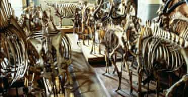 A storeroom at the Natural History Museum