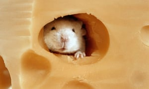 Mouse peeking through hole of swiss cheese