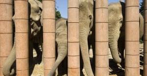 Elephants outside the new Elephant House designed by Foster + Partners at Copenhagen Zoo, Denmark