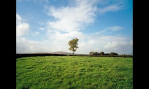 Union Jack flag in tree, County Tyrone, 1985 by Paul Graham