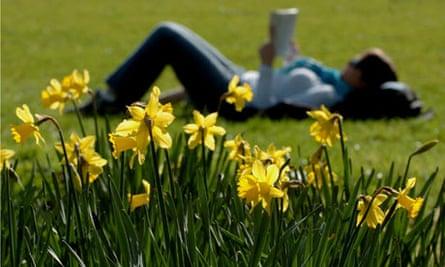 Daffodils in Cambridge park