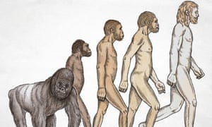 Evolution from ape to human being