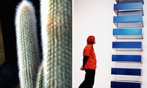 A cactus and a picture of Donald Judd's minimalist artwork