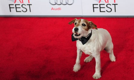 Uggie, star of The Artist, shown here posing on the red carpet