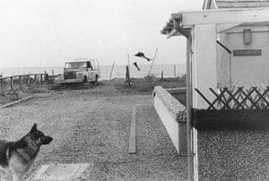 A dog in a caravan park