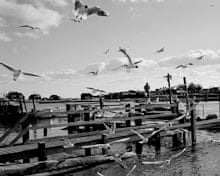 Seagulls on Southwold beach