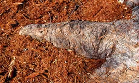 John Pawson's photograph of a tree trunk