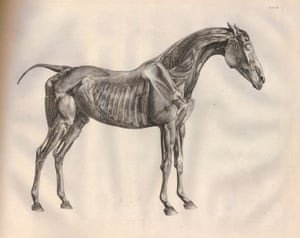 Under the skin of George Stubbs\'s The Anatomy of the Horse   Art and ...
