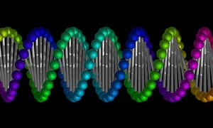 A model of the double helix structure of DNA