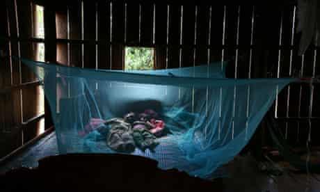 malaria cambodia