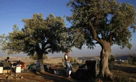 Jewish settlers sit under olive trees ne