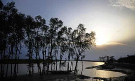 Mangrove trees are seen  in The Sundarba