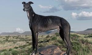 Daniel Naudé dog photograph
