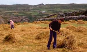 Raking in hay in County Cork